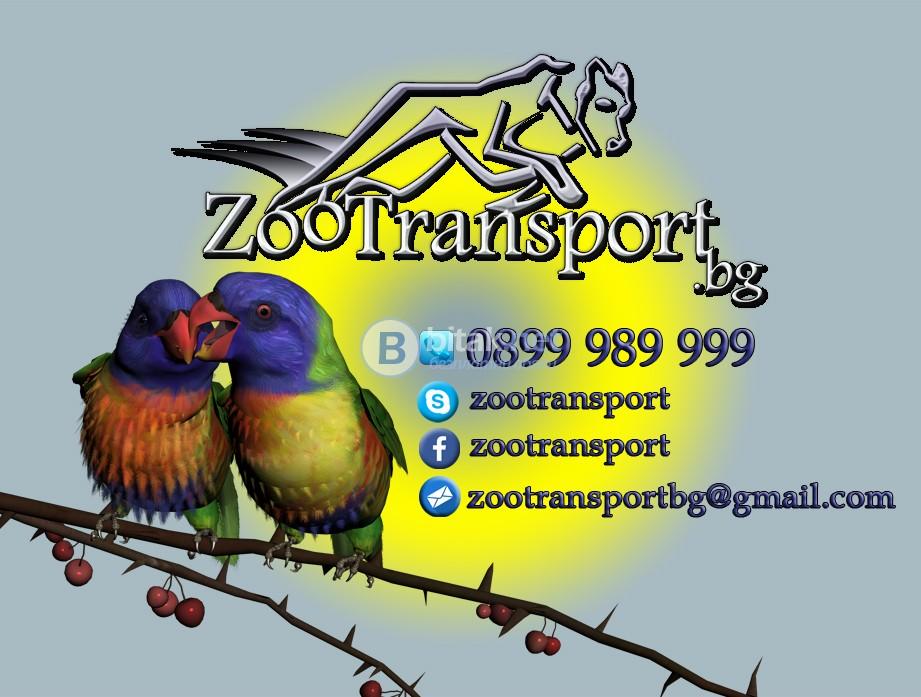 Транспортни услуги на домашни любимци в страната