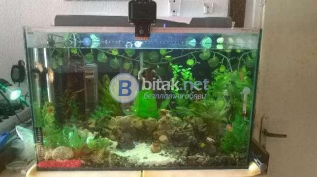 Продавам 2 бр. аквариуми по 60 литра-единият продаден