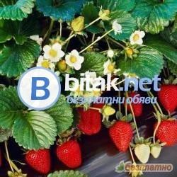 Бригада - Бране на Меки Плодове