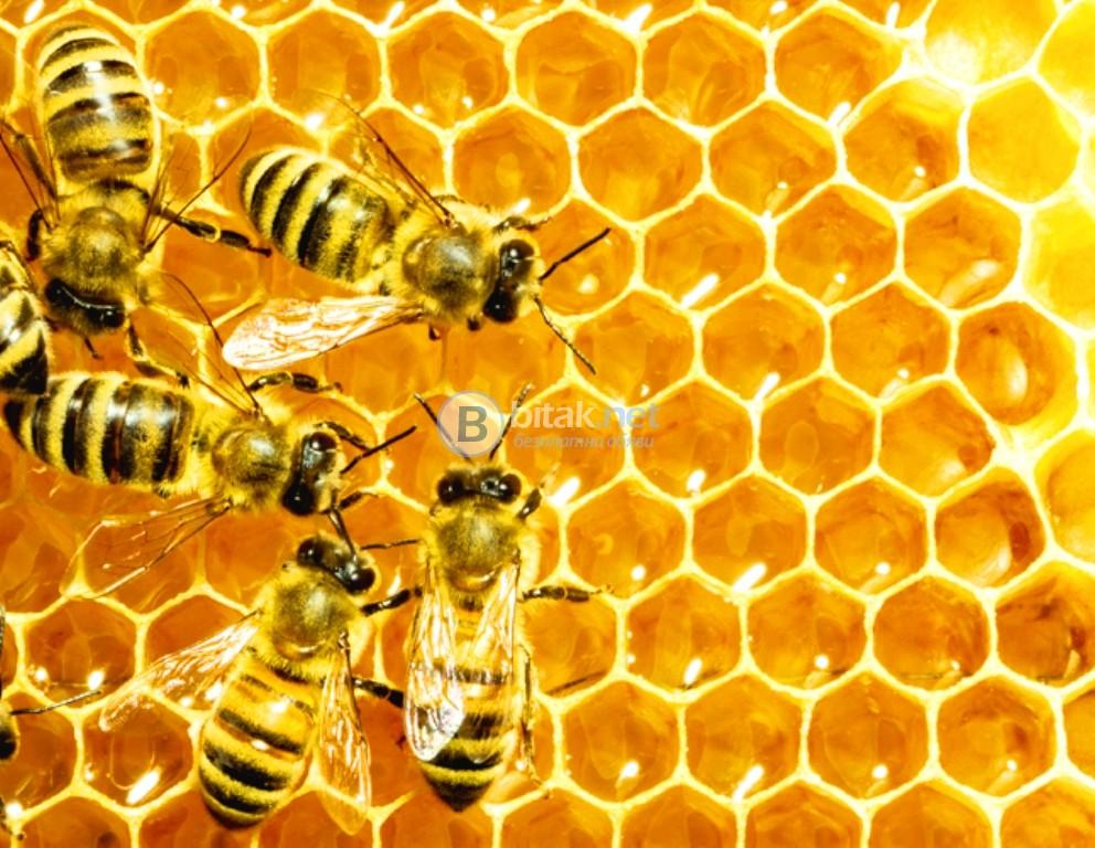 Пчеларско Изложение в Истанбул