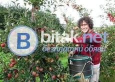 Обявяват се Работни Места - Ферми за Ябълки