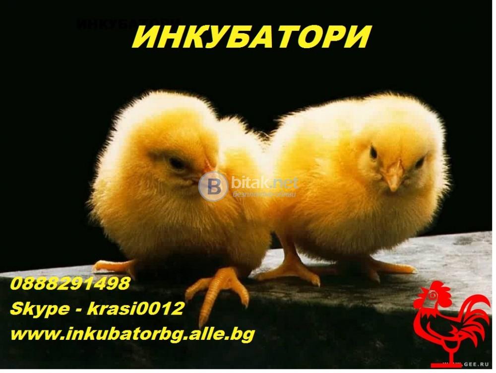 Домашни инкубатори за люпене на яйца