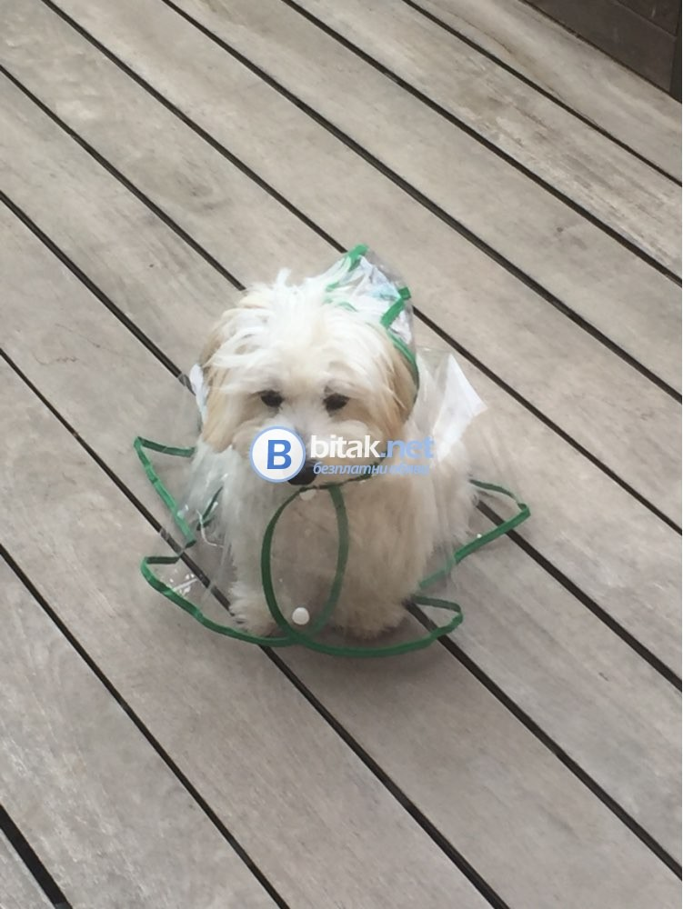 Прозрачен дъждобран за кучета