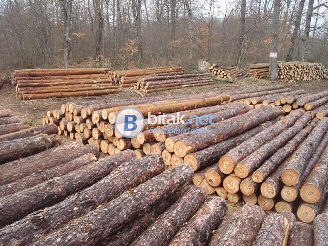 Продава дървени трупи от бял и черен бор по поръчка