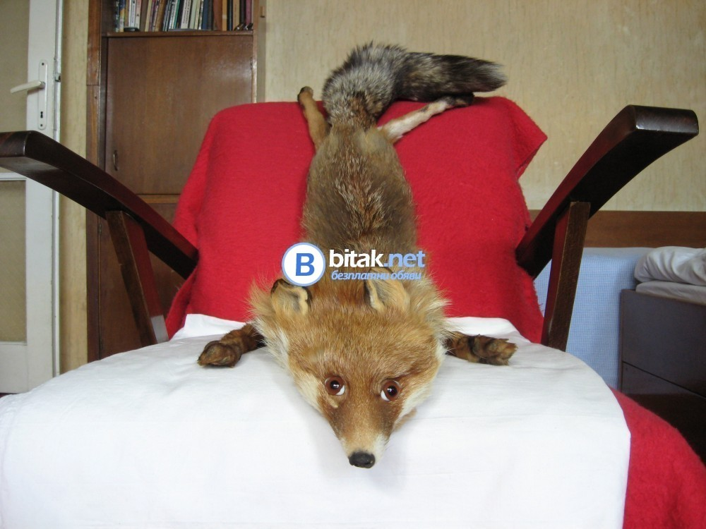 Продавам нова, обработена яка от цяла, естествена лисица.