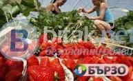 Бригади ягоди- старт март