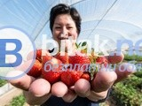 Бригади ягоди- старт Юли