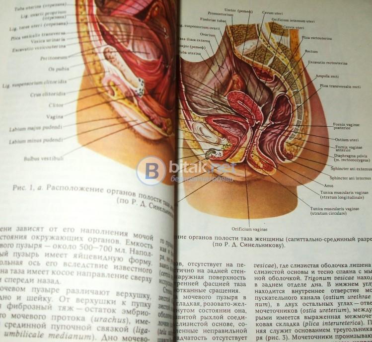 Анатомический атлас человеческого тела  Том 2 .,  д-р Ференц Кирш , Янош Сентаготаи