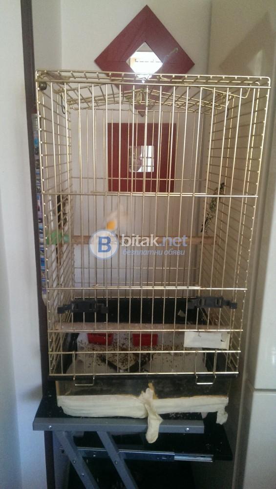пеещо канарче