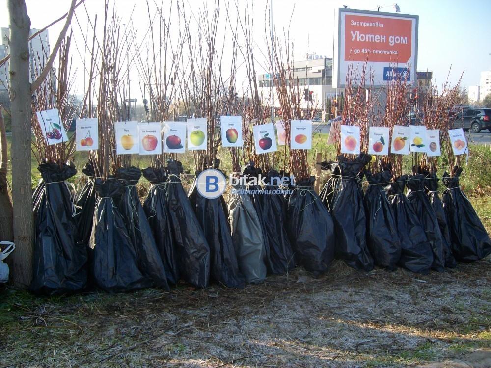 Овощни дръвчета - 10плюс1